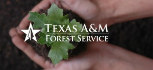 Aviso Hara song featured in the Texas A&M Forest Service video